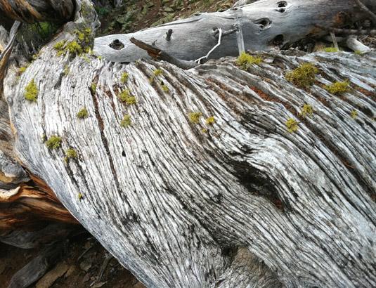 WoodTexture